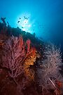 Coral on the wreck of the SS Yongala by David Wachenfeld
