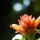 Wild Flower by BengLim