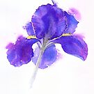 Purple sensation by Jacki Stokes