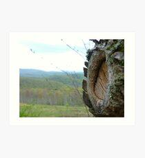 Knothole on Alleghany Mountain Art Print