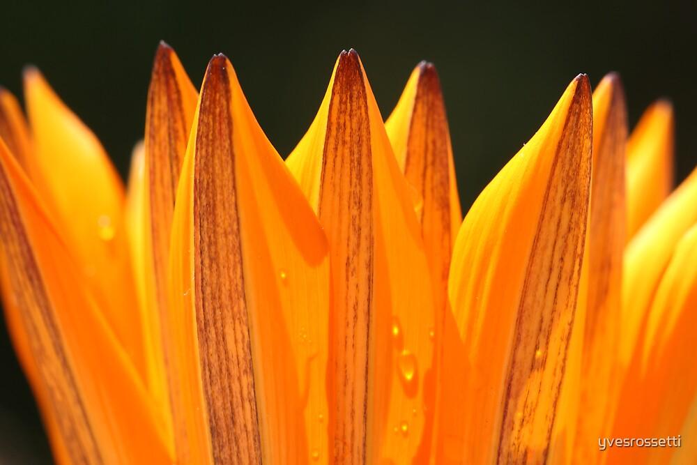 springy orange by yvesrossetti