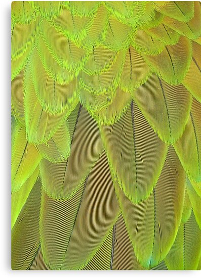 Close Up of Harlequin Macaw Bird's Feathers In Green  by taiche