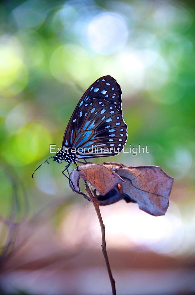 Blue Butterfly by Renee Hubbard Fine Art Photography