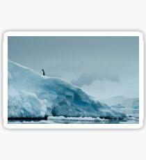 Lone Penguin on Ice Sticker