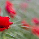 Poppy Love by Karen Havenaar