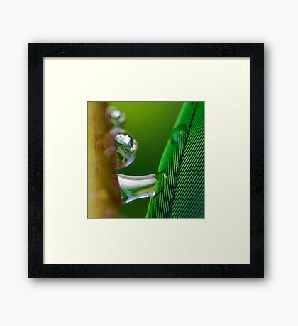 Dreams of Green Framed Print