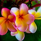 Tropical Beauty by Keith G. Hawley