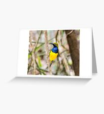 Olive-backed Sunbird Greeting Card