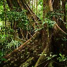 Daintree Rainforest - Mossman Gorge I by Richard Heath