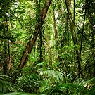 Daintree Rainforest - Mossman Gorge II by Richard Heath