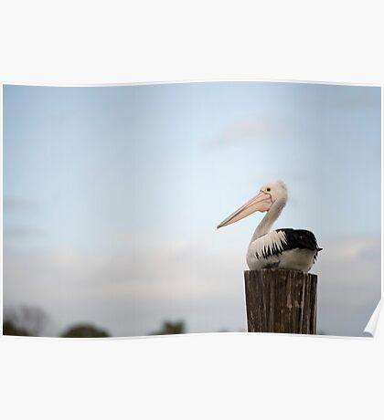 Pelican Perch Poster
