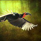 African Ground Hornbill by Brian Tarr