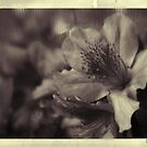 dreaming in sepia by leapdaybride