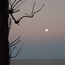 Moreton Bay Moonrise by sailgirl