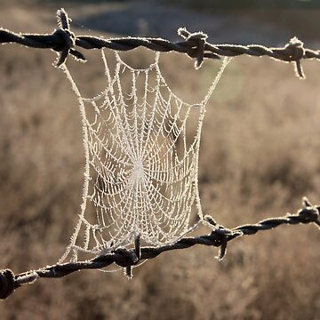 Frozen Web by timoss