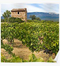 Wine growing - Mont Ventoux Poster