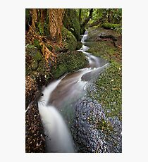 Myrtle Creek Photographic Print