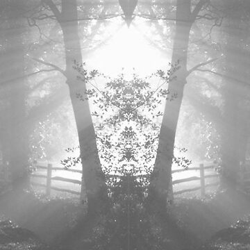 Black and WhiteTree Photo (mirrored image) iPhone case by objThom