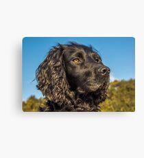 Animal, Dog, Cocker Spaniel, Black Canvas Print