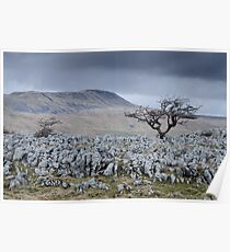 Whernside & the Limestone Fields, Yorkshire Dales National Park Poster