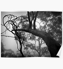 Scary Trees- Belair National Park. Poster