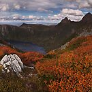 Carpet of Fagus - Plateau Creek Cradle Mountain by Mark Shean
