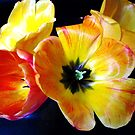 SPRING TULIPS by judyann