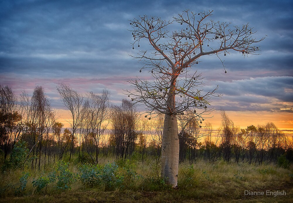 Boab Alight by Dianne English