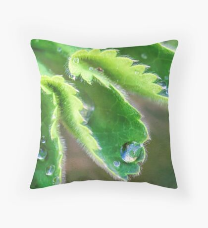 Water Droplets on Lady's Mantle Throw Pillow