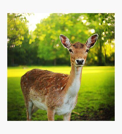 Little deer Photographic Print