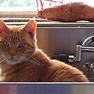 247/365 sink. tap. spout. sweet potato. plug. cat. whiskers. eyes.ears. sky. by LouJay