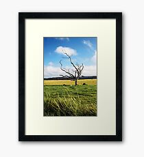 Evelyn, Queensland, Australia Framed Print