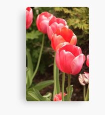 I have flower after flower for you Canvas Print