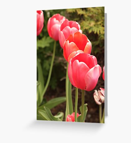 I have flower after flower for you Greeting Card
