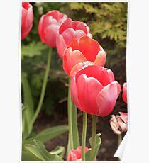 I have flower after flower for you Poster