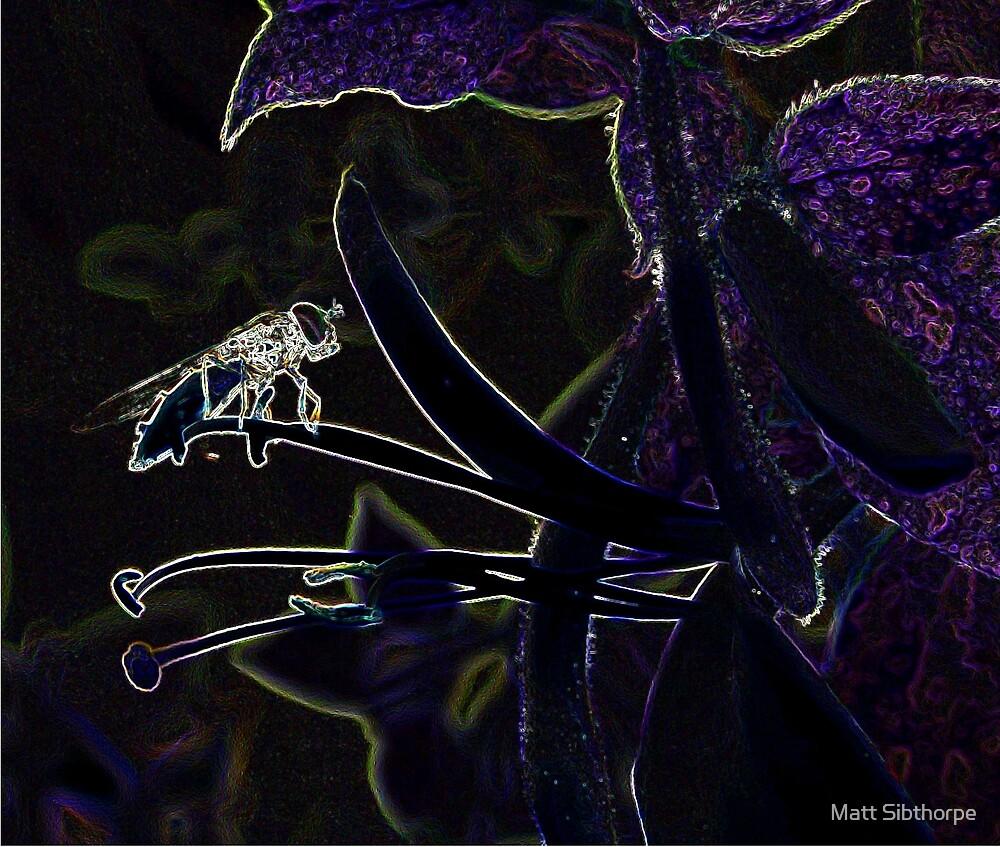 Hoverfly by Matt Sibthorpe