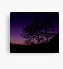 Lilac Tree Canvas Print