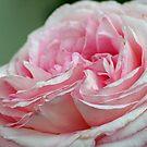 """Eden"" Rose by SKNickel"