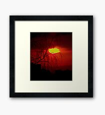 Red Willow Framed Print