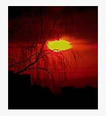 Red Willow Photographic Print