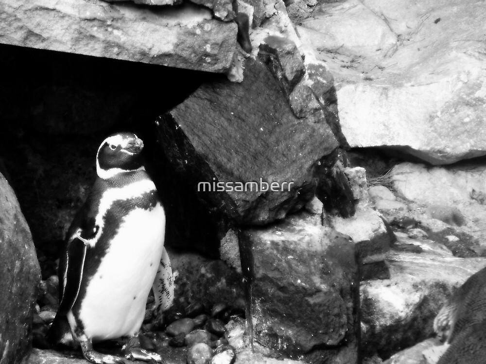 Penguin.  by missamberr