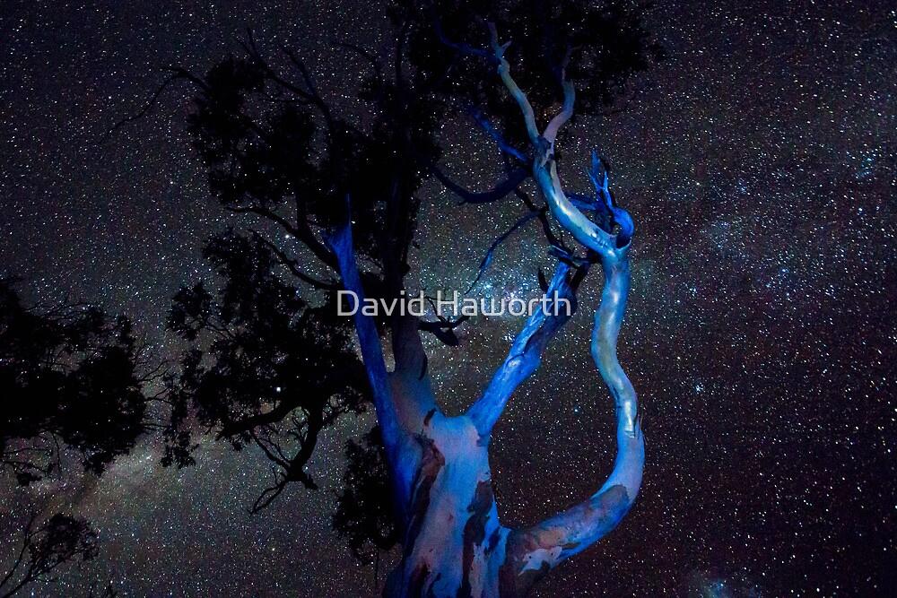 Blue Gum by David Haworth