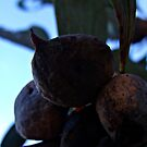 248/365 strange fruit by LouJay