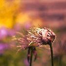Dry Garden Flora by Patrick Metzdorf