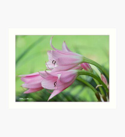 UNTOUCHED BEAUTY - the Indigenous Belladonna Lily - DIE BELLADONNA LELIE  Art Print