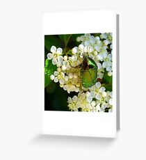 green beetle Greeting Card
