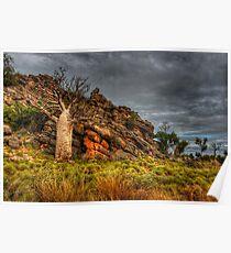 On the Windjana Gorge Rd - Kimberley WA Poster
