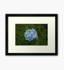 Blue Flower Ball Framed Print