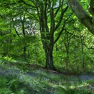 Billinge Woods Bluebells by inkedsandra