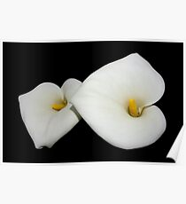 beautiful calla lilies on black Poster